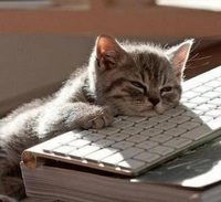 cat so tired